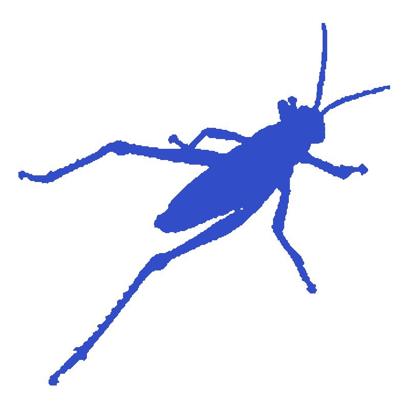 Grasshopper Corso Online